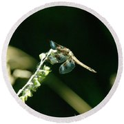 Dragonfly Resting In The Wind  Round Beach Towel