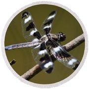 Dragonfly Twelve Spot Skimmer Round Beach Towel