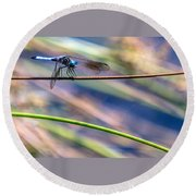 Dragonfly Walking A Tightrope Round Beach Towel