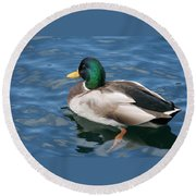 Green Headed Mallard Duck Round Beach Towel