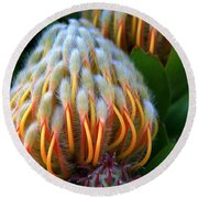 Dramatic Protea Flower Round Beach Towel