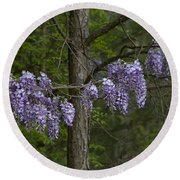 Draping Wisteria Frutescens Wildflower Vines Round Beach Towel