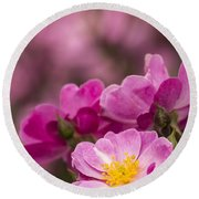 Pink Old Fashioned Rose Round Beach Towel
