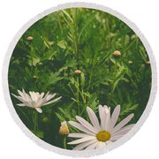 Dreaming Of Daisies Round Beach Towel