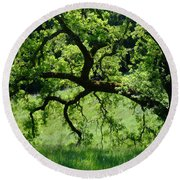 Dreaming Under The Old Oak Round Beach Towel