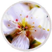 Dreamy Cherry Blossom Round Beach Towel