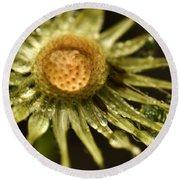 Dried Dandelion After Rain Round Beach Towel by Iris Richardson