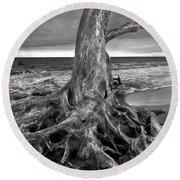 Driftwood On Jekyll Island Black And White Round Beach Towel