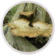 Dryads Saddle Bracket Fungi - Polyporus Squamosus Round Beach Towel