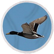 Duck Flight Round Beach Towel