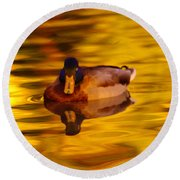 Duck On Golden Water Round Beach Towel