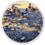 Duck Parade On The Beach Round Beach Towel
