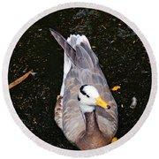 Duck Portrait Round Beach Towel
