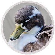 Duck Portrait Round Beach Towel