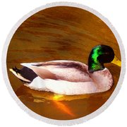 Duck Swimming On Golden Pond Round Beach Towel