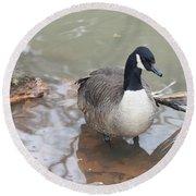 Duck Wading In A Stream Round Beach Towel
