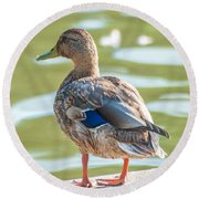 Duckling By The Lake  Round Beach Towel
