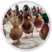Duckorama Round Beach Towel