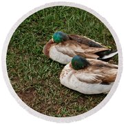 Ducks At Rest Round Beach Towel