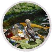 Ducks At The Koi Pond Round Beach Towel