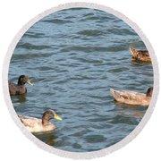 Ducks On Spaulding Pond Round Beach Towel