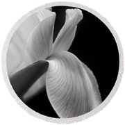 Dutch Iris Flower Macro Black And White Round Beach Towel