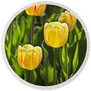 Dutch Yellow Tulip Flowers On Windmill Island In Holland Michigan Round Beach Towel
