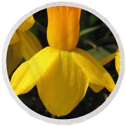 Dwarf Cyclamineus Daffodil Named Jet Fire Round Beach Towel