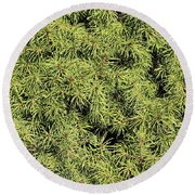 Dwarf Evergreen Round Beach Towel