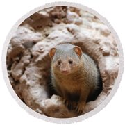Dwarf Mongoose  Round Beach Towel
