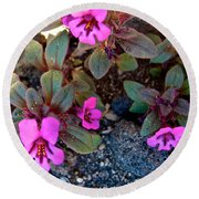 Dwarf Purple Monkeyflower In Lava Beds Nmon-ca Round Beach Towel