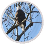 Bald Eagle Sunny Perch Round Beach Towel