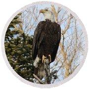 Eagle 5 Round Beach Towel