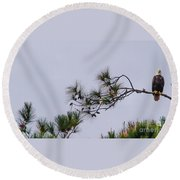Eagle In The Pines Round Beach Towel