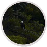 Eagle In White Pine Round Beach Towel