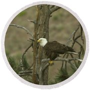 Eagle On A Tree Branch Round Beach Towel