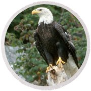 Eagle Perched Atop Stump Round Beach Towel