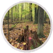 Early Autumn Woods Round Beach Towel