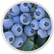 Early Blue Blueberries Round Beach Towel