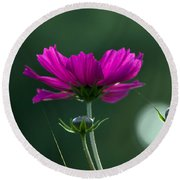 Early Dawns Light On Fall Flowers 03 Round Beach Towel