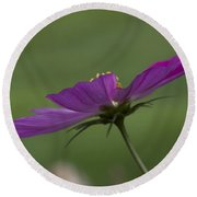 Early Dawns Light On Fall Flowers 04 Round Beach Towel