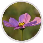 Early Dawns Light On Fall Flowers 05 Round Beach Towel