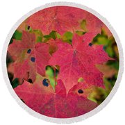 Early Fall Of Norway Maple Round Beach Towel