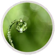 Early Morning Dew Round Beach Towel