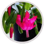 Easter Cactus Digtial Painting Square Round Beach Towel