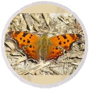 Eastern Comma Round Beach Towel