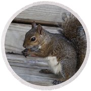 Eastern Gray Squirrel-4 Round Beach Towel