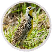 Eastern Meadowlark Round Beach Towel