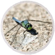 Eastern Pondhawk Round Beach Towel