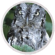 Eastern Screech Owl In Tree Round Beach Towel